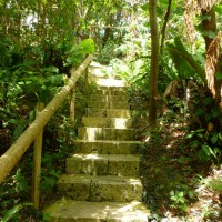 A Walk through the Okinawan Jungle